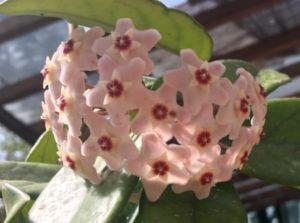 IMG 3994 300x223 Tonys flowers // I fiori di Tony