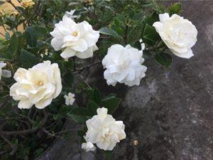 IMG 3999 300x225 Tonys flowers // I fiori di Tony